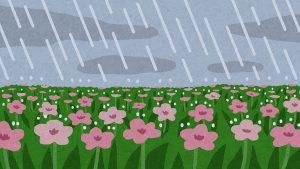 なばなの里が雨の場合の対策法!【雨でもイルミネーション見たい!】
