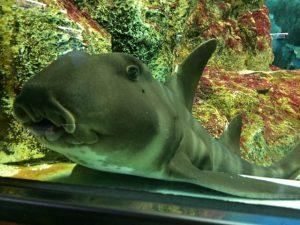 ネコザメの飼育方法は?餌や選ぶ水槽について解説!