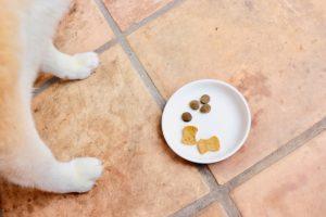 柴犬が吐く時の原因と対策【吐いた色】による判断方法について