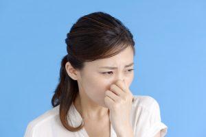 ポメラニアンの臭いは強い?原因と対策を紹介!