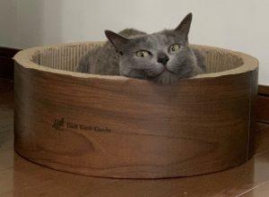 ロシアンブルーは【嫉妬深い猫説】を検証!対策方法も解説!